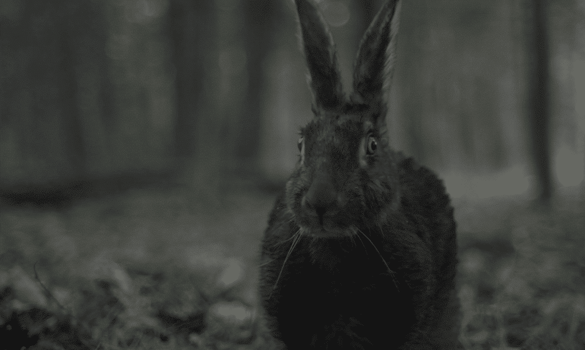 Creepy rabbit in the woods. Prey or is it preying on William and Caleb?