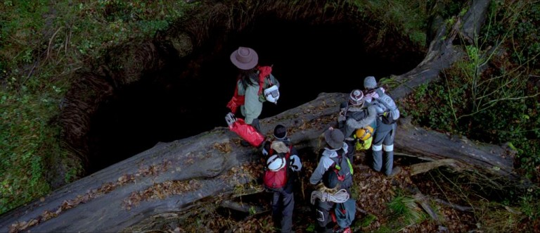 Sarah and her friends descent into the upside-down world below.